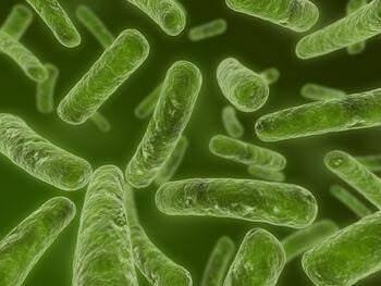 Chlamydia trachomatis : pour un dépistage systématique